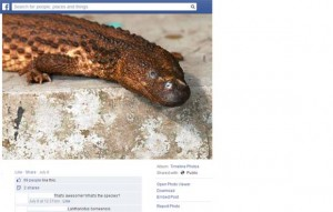 A posting about the earless monitor lizard on Facebook. Image courtesy of TRAFFIC