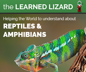 The Learned Lizard