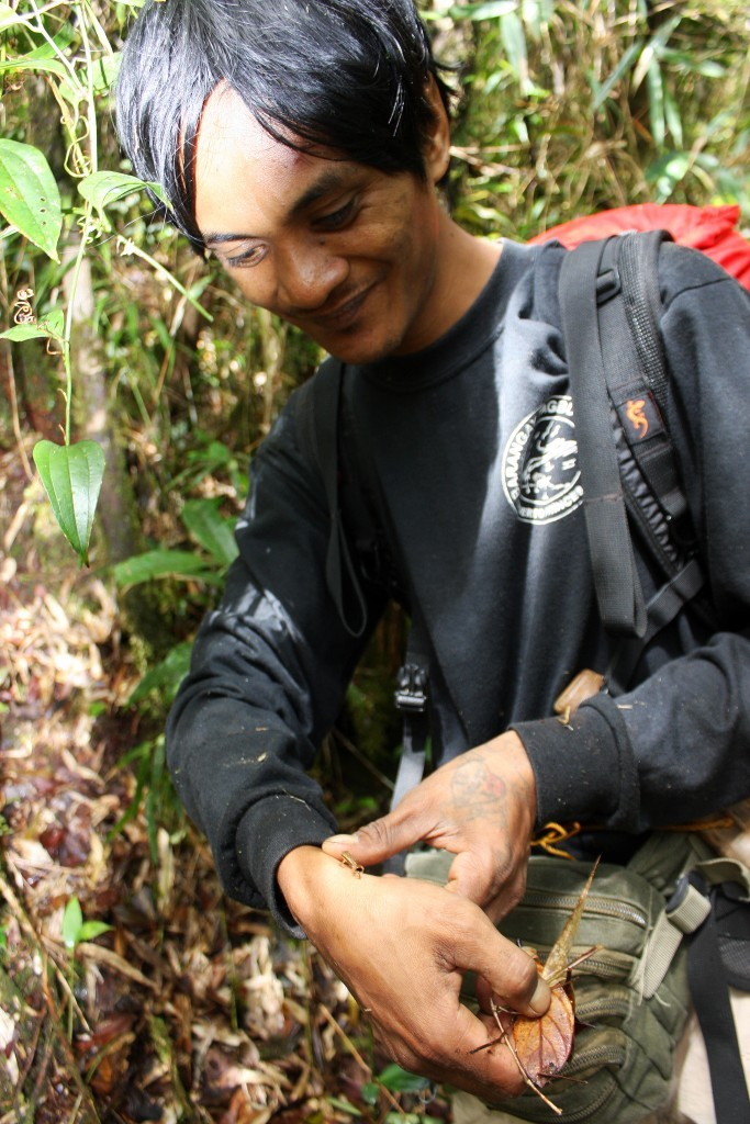 The Palawan toadlet (Pelophryne albotaeniata) with biologist Edgar Jose. Photo: Center for Sustainability.